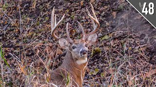 HUGE BUCK at 15 Yards!  What Happened??