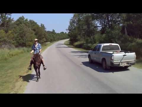 Registered Iceland mare for sale 12 years Oklahoma Elisabeth Haug