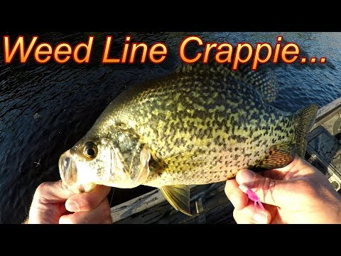 Summer Crappie Fishing- Fish Weed Lines For Summer Crappie