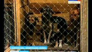 1 07 13 Вести собаки