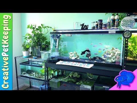16-nano-tanks-and-one-55-gallon-aquarium-|-fish-fan-friday