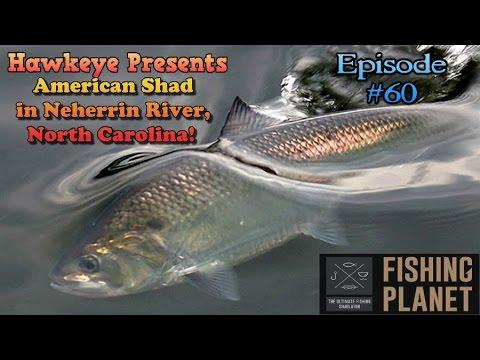 Fishing Planet – Neherrin River – Flathead Catfish, Gar ...