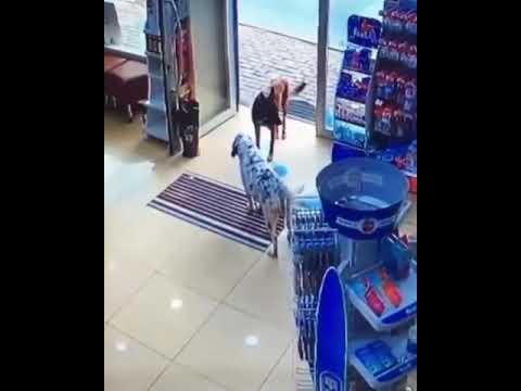 Cadela entra em farm�cia e mostra pata machucada