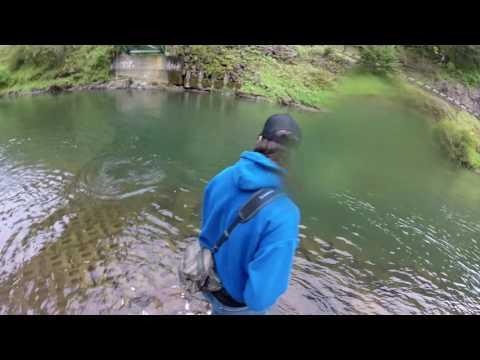 Kalama River Springers