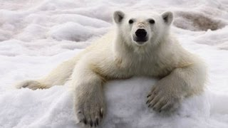 Silversea Expeditions - Svalbard