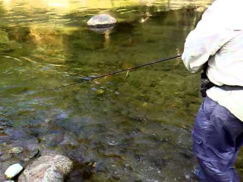 Trampas para mojarras funnycat tv for Como hacer un estanque para mojarras