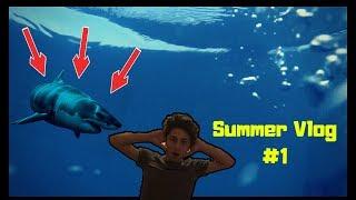 შავ ზღვაში ზვიგენი გამეჩითა?🐋Summer Time #1
