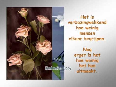 mooie bloemen spreuken Bloemen met spreuken.wmv   YouTube mooie bloemen spreuken