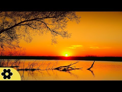 8 Hour Relaxing Sleep Music, Calm Music, Soft Music, Instrumental Music, Sleep Meditation, ✿3242C