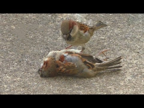 Bird Tries To Revive Mate