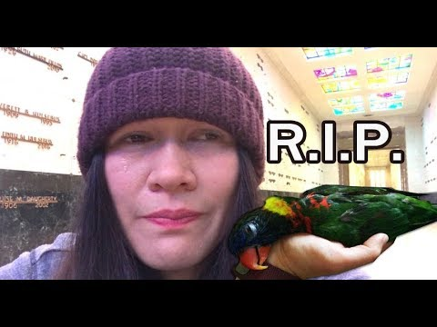 MY BIRD DIED! *R.I.P*