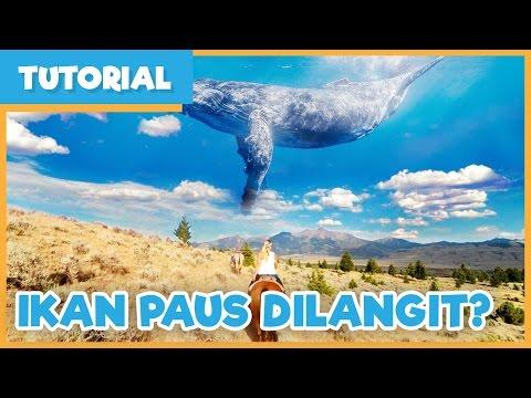 [ Tutorial ] Cara Edit foto ikan paus diatas...