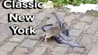 Ozzy Man Reviews: Rat vs Pigeon in New York