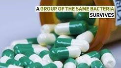 CBD for Antibiotic Resistance
