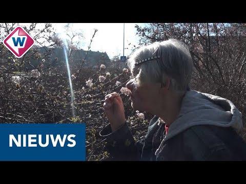 Leidse biologe verbaast zich over vroege komst insecten - OMROEP WEST
