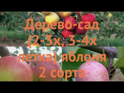 Яблоня обыкновенная Богатырь - Грушовка московская 🌿 обзор: как сажать, саженцы яблони