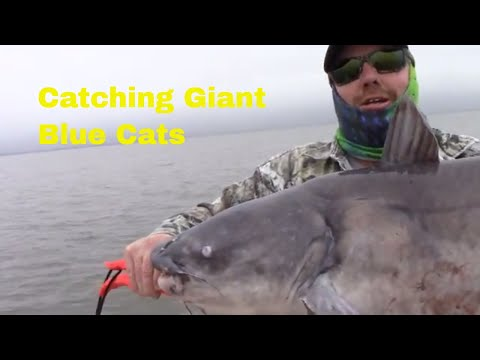 Chasing Giant Blue Catfish In East Texas