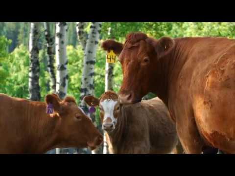 Cow Calfenomics 2016: Marketing Outlook