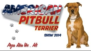 American Pit Bull Terrier Show / Poza Rica 2014