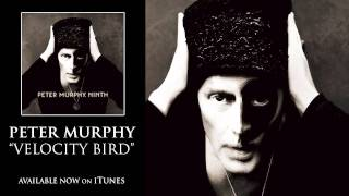 Peter Murphy - Velocity Bird [Audio]