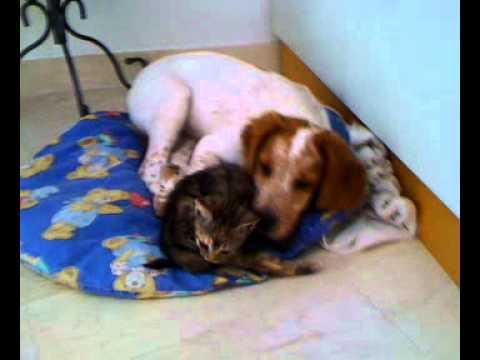 Cani e gatti affettuosi youtube for Youtube cani e gatti
