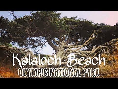 Kalaloch beach and the Tree of Life, Olympic National Park, Washington