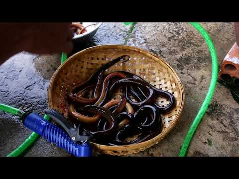 Clean Eel For Soup | រៀបចំធ្វើស៊ុបអន្ទង់