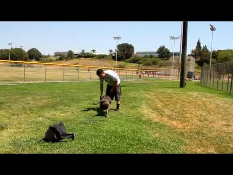 DOG JUMPS 10 FOOT FENCE !