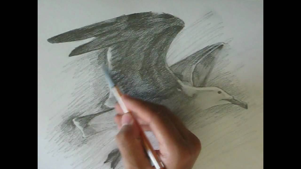 drawing a seagull youtube