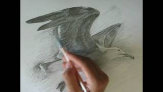 Drawing a Seagull