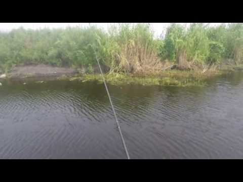 Bluegill Fishing On The St. Johns River