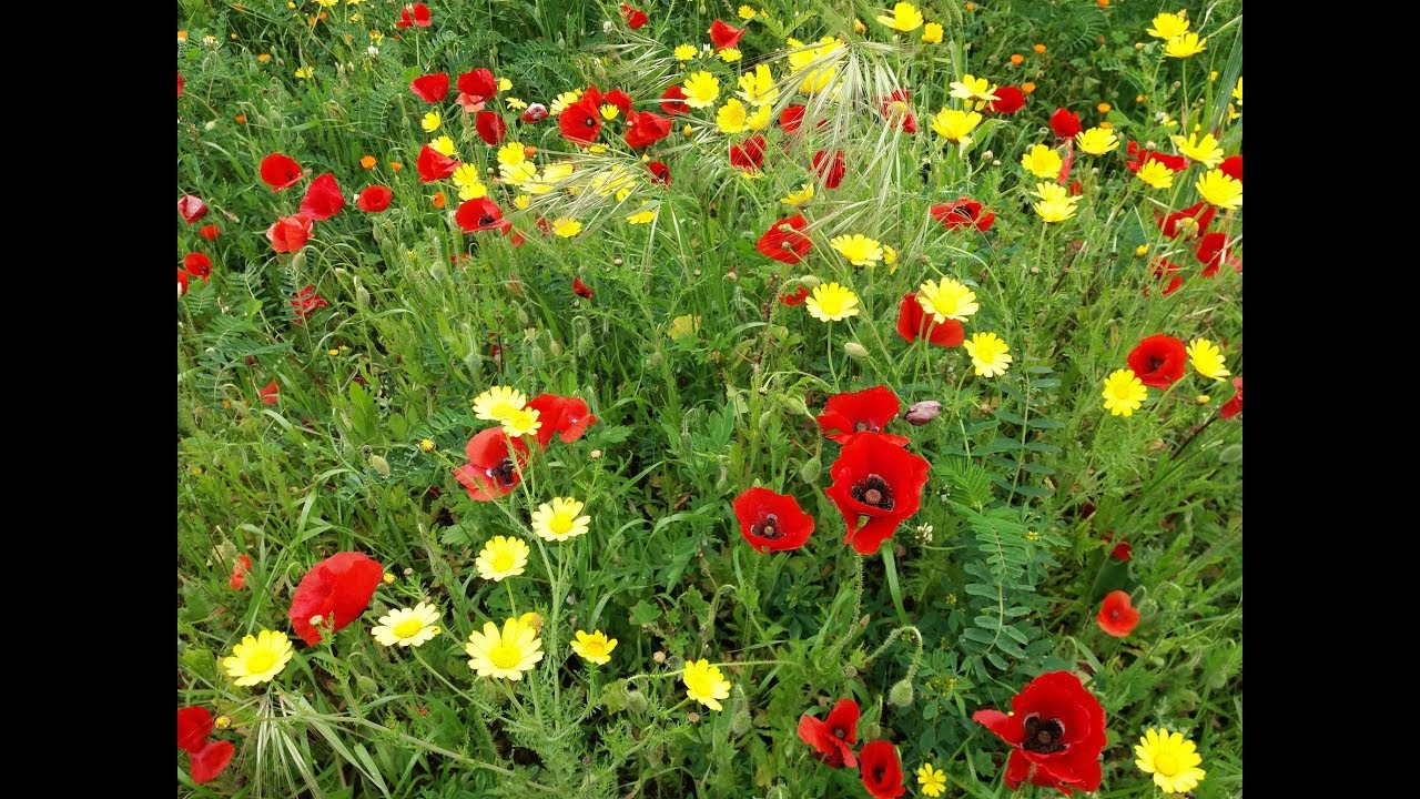 Wonderful Wild Flowers from Morocco