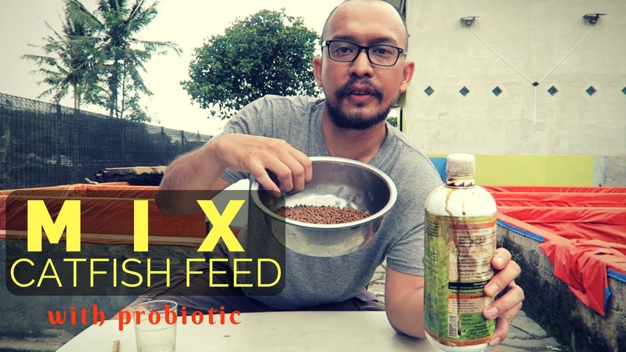 Download How To Mix Catfish Feed With Probiotics