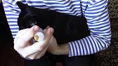 Кот баюн лекарственное средство для кошек и собак, содержащее в качестве. Стоп-стресс капли для кошек и собак успокоительный препарат.