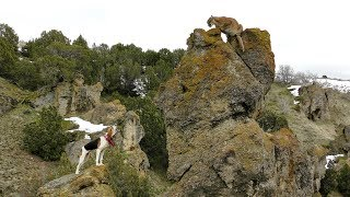 Catch and Release Mountain Lion Hunting