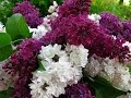 #Волшебный май  #Очень красивая мелодия и  видео!
