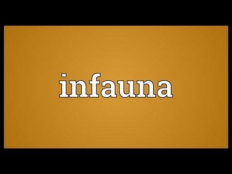 Header of infauna