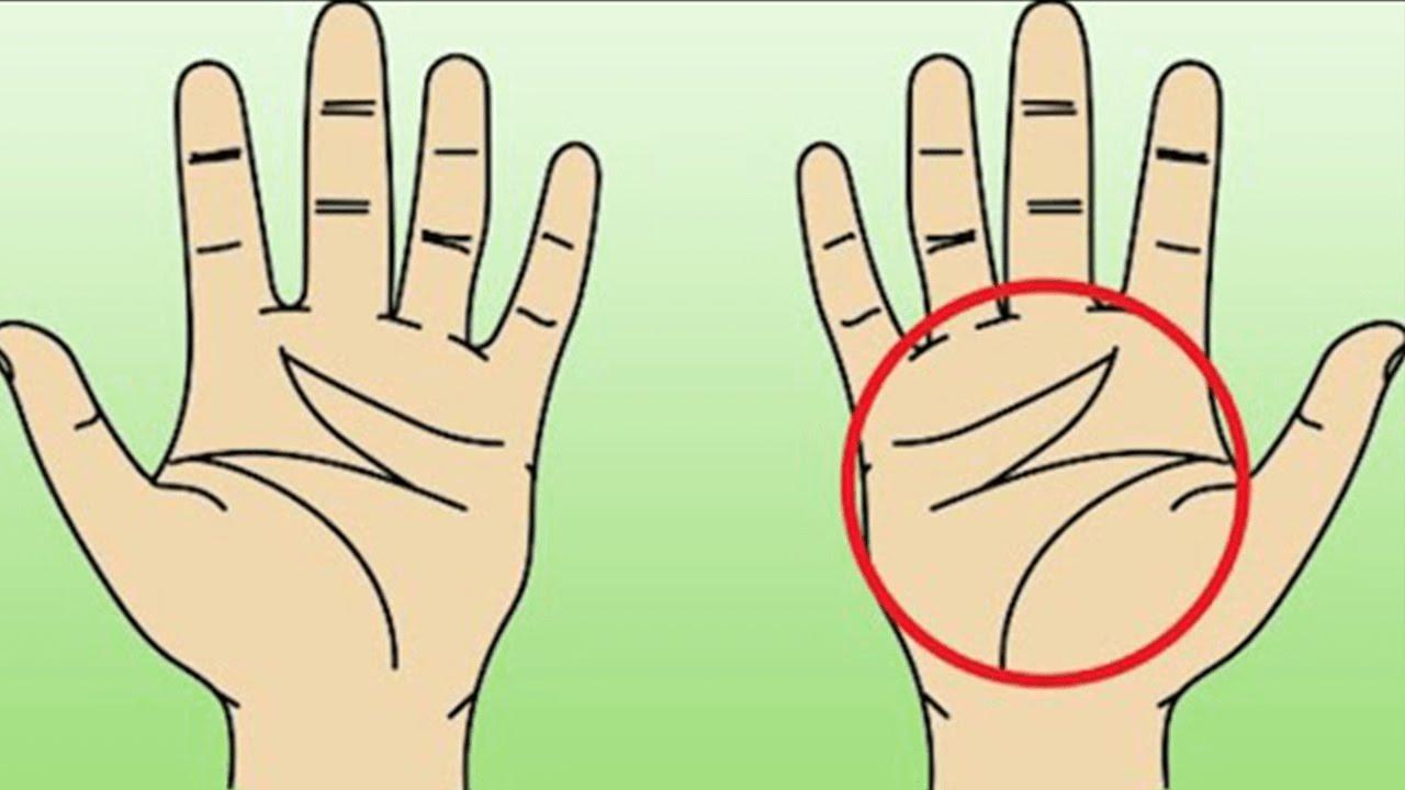 Handfläche lebenslinie Handlesen lebenslinie