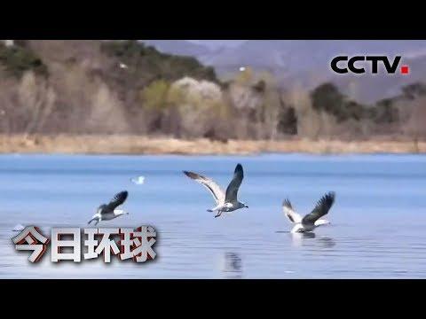 [今日环球] 北京:密云水