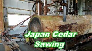 Japan Cedar Sawing!!