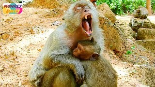 Poor Timo! Why Tima mom make baby cry seizure too much with deny milk like this | Monkey Daily 3192