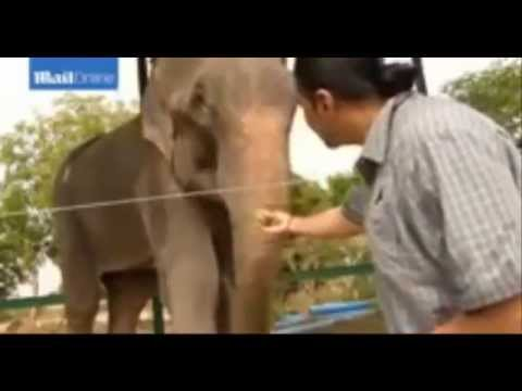 Animal Video ~ Raju The Elephant After Deprived 50 years Cry when Freed Wildlife SOS