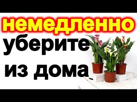 Вопрос: Почему у меня в доме сразу вянут растения?
