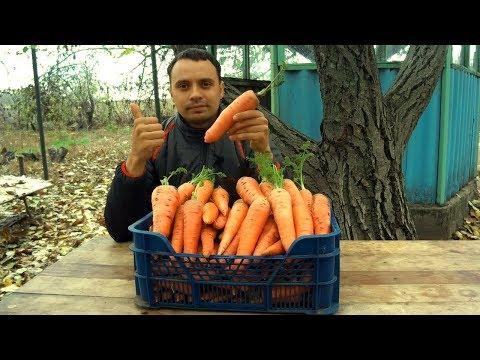 Вопрос: Как вырастить большую морковку?