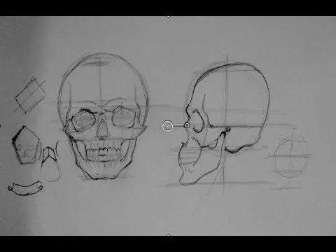 Drawing Human Anatomy & Head Proportions | How to Draw a ...