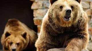 Global Bear? The Contagion Out of China