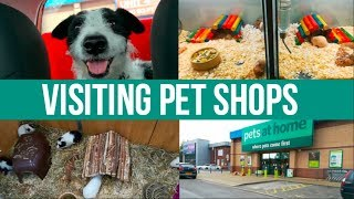 Visiting UK Pet Shops (with my dog!)