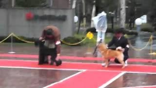 北海道=お嬢(エゾピリカ・むつ北城相馬)