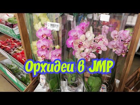 Очень красивые Орхидеи в JMP на Фуд Сити.