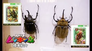 Mushiking Insect Specimen Introduction Butterfly Park & Insect King...